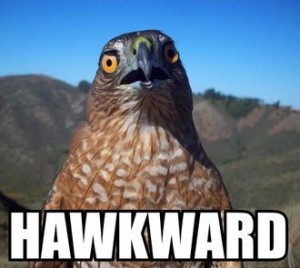 """A hawk looking directly at camera with the phrase """"HAWKWARD"""" in LOL Cat-style below it."""